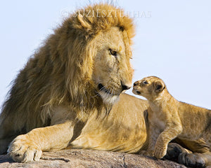 photo of lion dad and cub