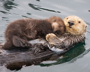 Mom and Baby Sea Otter Photo