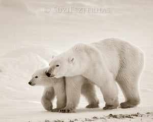mom and baby polar bear photo sepia