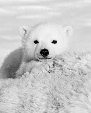 cute baby polar bear black and white