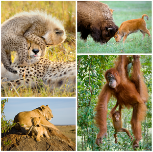 Playful Baby Animals Set in Color