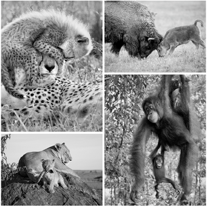 Playful Baby Animals Set in Black and White