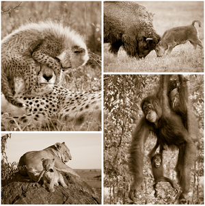 Playful Baby Animals Set in Sepia