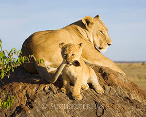 Playful lion cub with mom