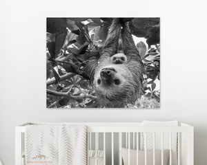 Mom and Baby Sloth Hanging Photo