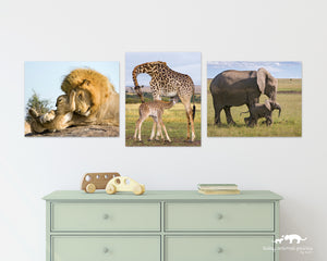 Safari Snuggles Photo Set (Color)