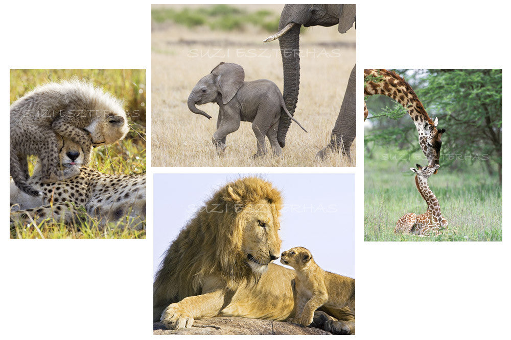 safari animals greeting cards