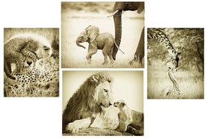 safari animal greeting cards in sepia