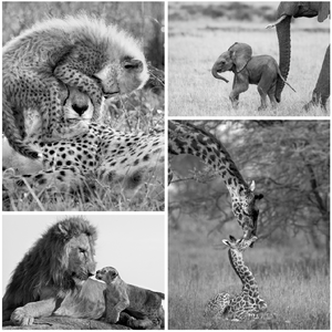 Safari Baby Animals Print Set Black and White