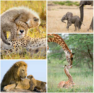 Safari Baby Animals Print Set Color