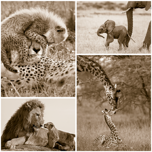 Safari Baby Animals Print Set Sepia
