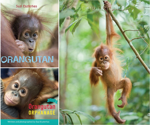 Orangutan Lovers Bundle
