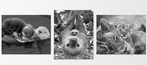 Snuggle Baby Animals Photo Set (Black and White)
