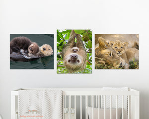 Snuggle Baby Animals Photo Set (Color)