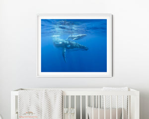 Mother and Baby Whale Photo