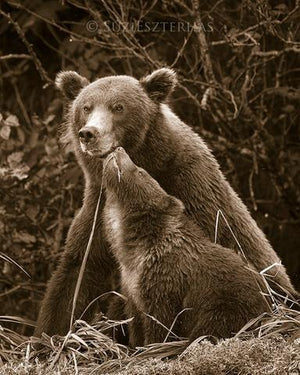 Baby Brown Bear and Mom Nuzzling Photo