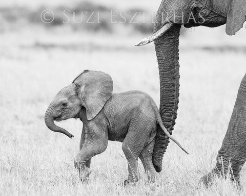 cute baby elephant black and white