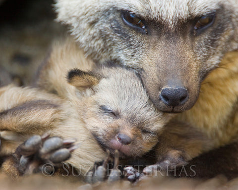 mom and baby animal nursery photos