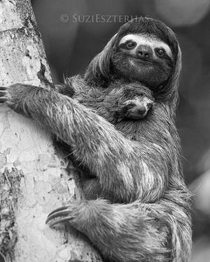 Baby Sloth and Mom Photo