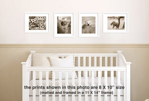 baby animal sepia photos in nursery