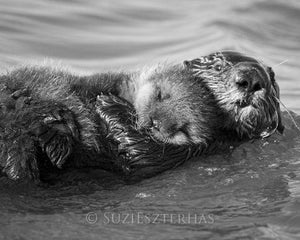 Sea Otter Hugging Baby Photo