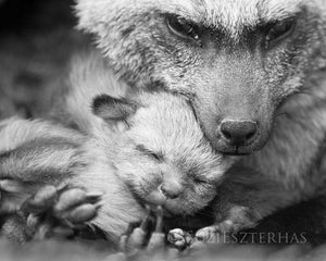 Mom and Baby Fox Photo