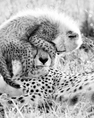 cheetah mom cub black and white