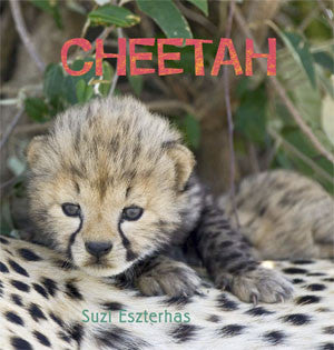 baby cheetah book