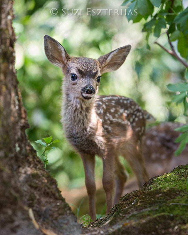 fawn in forest photo