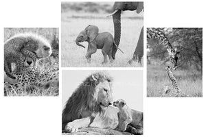 safari animal greeting cards