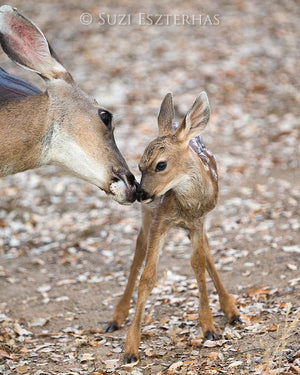 mom and baby deer photo