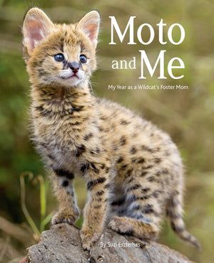 moto and me childrens book