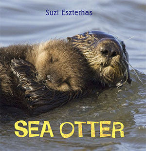 baby sea otter book