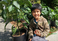 boy with pepper plant