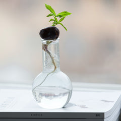 Tips for a successful houseplant propagation