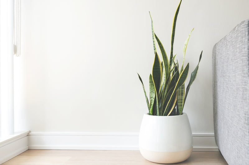 How to keep my houseplants happy and healthy year-round