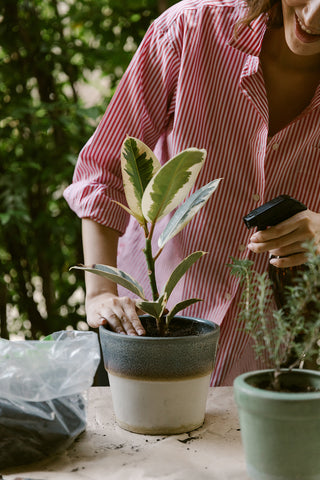 What to Consider Before Moving Indoor Plants Outdoors for Summer