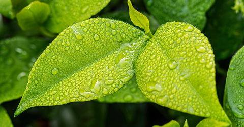 Plants increase the humidity in your home