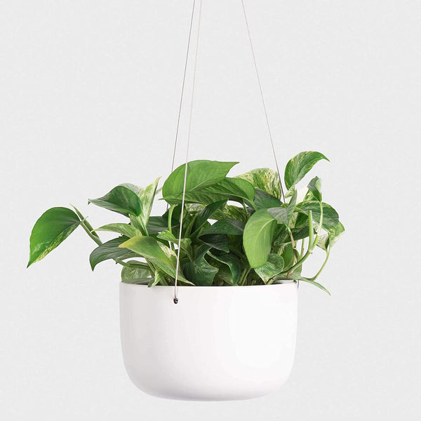 Peach and Pebble white ceramic hanging planters