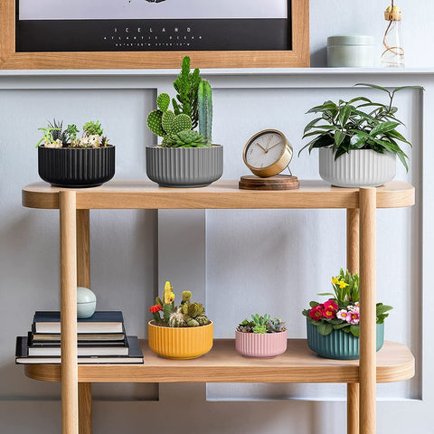 Live houseplants and succulents for sale
