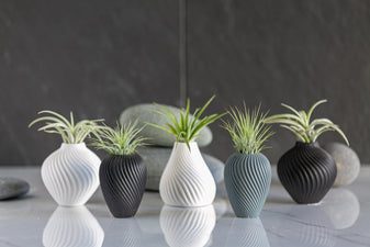 Pre-Potted Tillandsia Air Plants -  Streamline Collection