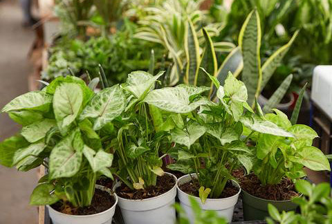 Live houseplants and succulents delivered to your home.