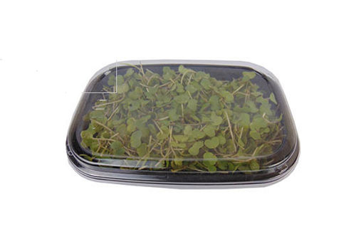 Micro Greens Musturd leaves (Price per pkt Approx. 50gms) - Fast & Fresh Global LLP