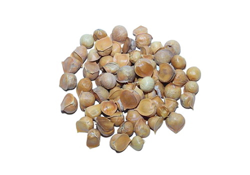 Himalayan Garlic (Price per 250gms)