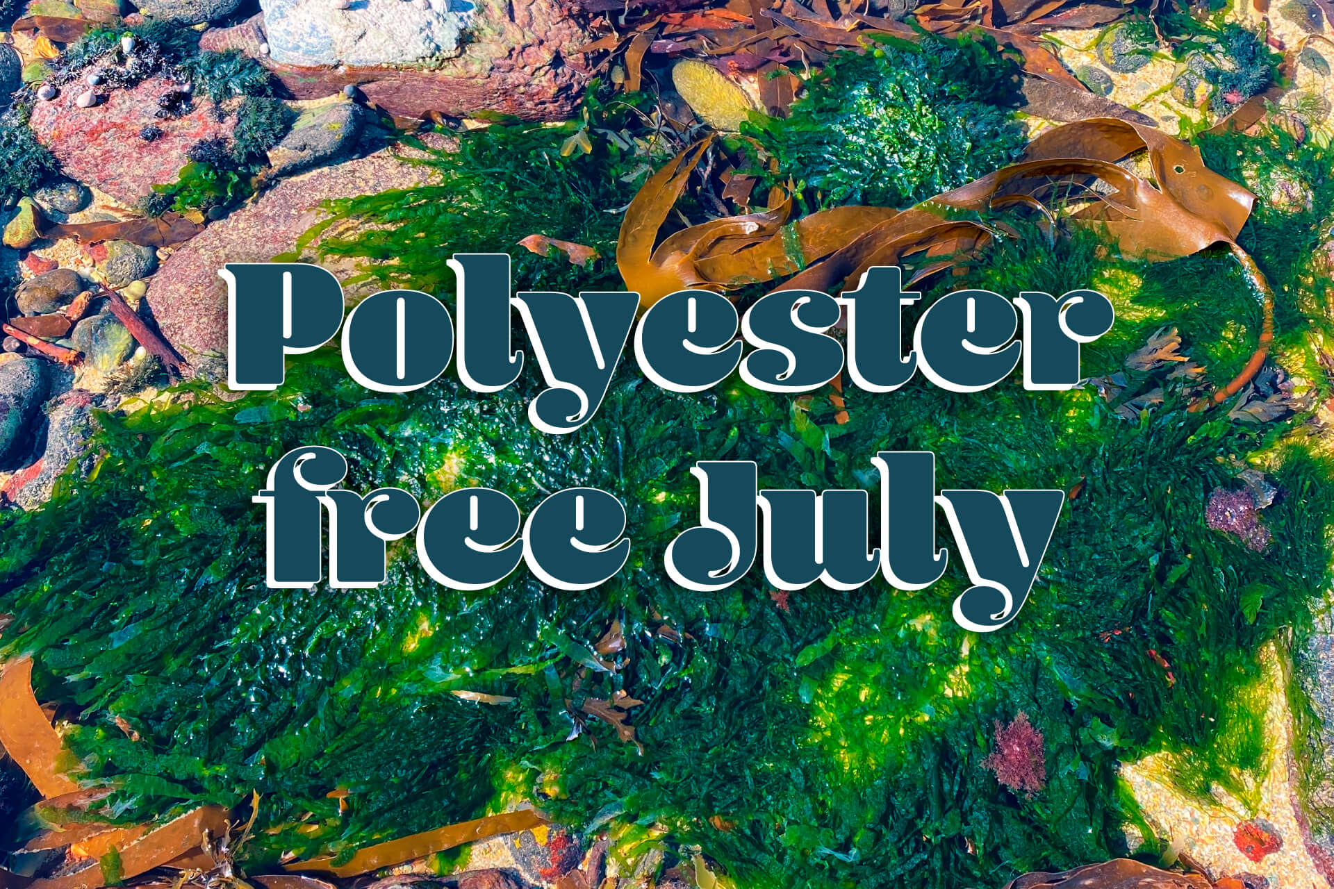 Seaweed to replace polyester