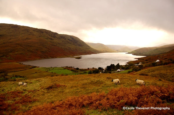 Limited edition Photography - Lough Nafooey, Connemara, Co. Galway - Cécile Thévenet