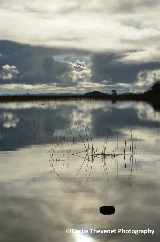 Limited edition Photography - Reflections, Lough Carra, Mayo - Cécile Thévenet