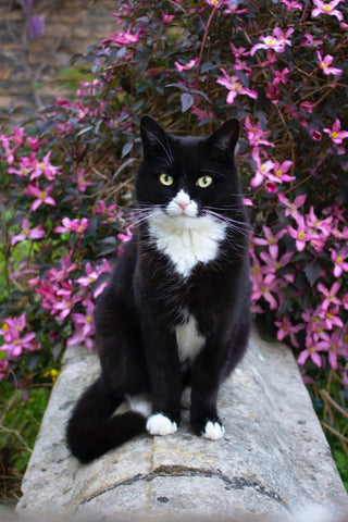black and white cat sitting in front of flowers