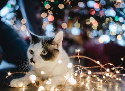 cat with a string of lights