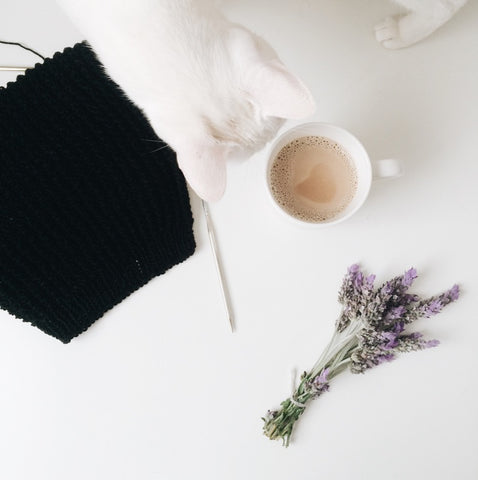 white cat looking at coffee cup and lavender